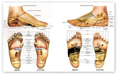 Apprenez la réflexologie en ligne. Technique de relaxation, réflexologie des pieds, réflexologie des mains. Apprenez à masser