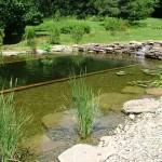 Comment construire une piscine naturelle