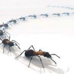 Remèdes écologiques pour se débarrasser des fourmis