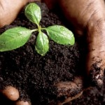 Comment fabriquer du compost. Trucs et astuces bio