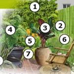 Plan d'un petit jardin thaï