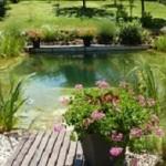 Construire une piscine naturelle: Une méthode de qualité moins chère !