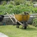 Des conseils malins pour votre jardin