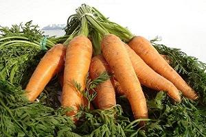 Tout savoir sur les bienfaits de la carotte