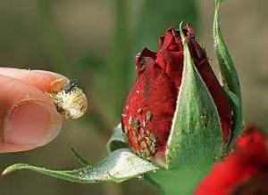 7 astuces colo contre les insectes nuisibles au jardin - Les bienfaits du marc de cafe au jardin ...