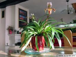 plante interieur bien etre